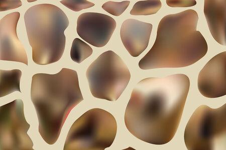 camelopardalis: genuine leather skin of giraffe