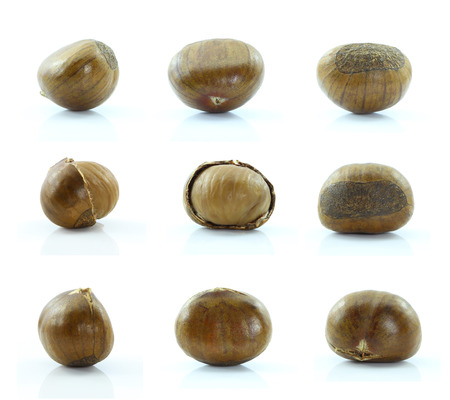 Chestnut on white background.