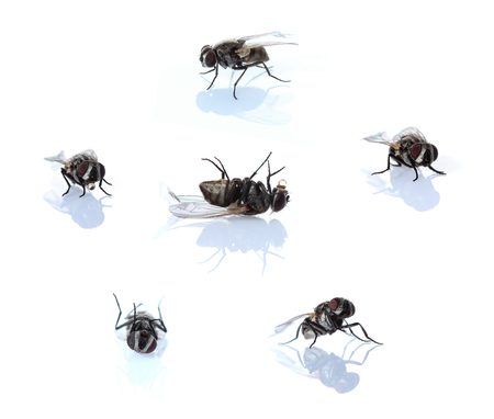 nature background: fly on a white background.