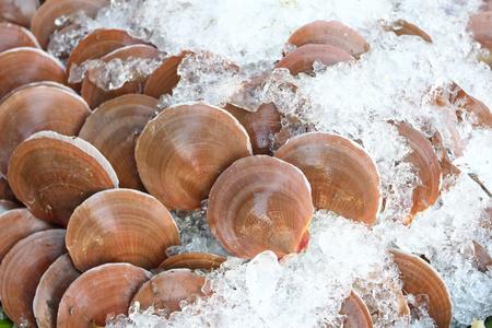 scallops: live scallops Stock Photo