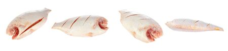 white nile: Nile or red tilapia, Oreochromis niloticus, isolated on white background.