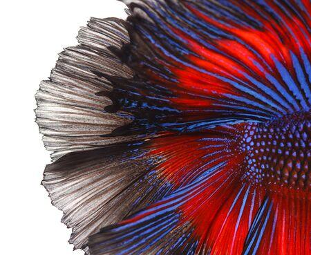 テール シャムの戦いの魚の質感 写真素材