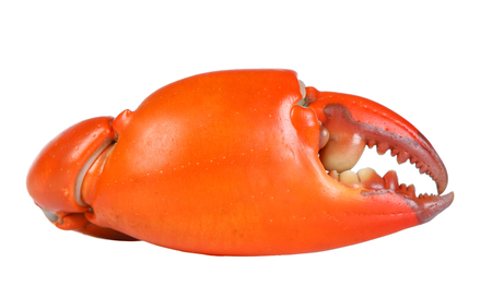 cangrejo: Hervida cangrejo garra en la esquina. Aislado en el fondo blanco