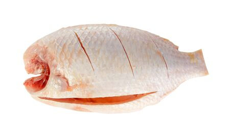 oreochromis: Nile or red tilapia, Oreochromis niloticus, isolated on white background.