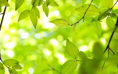 Hojas verdes en los fondos verdes  Foto de archivo - 45900818