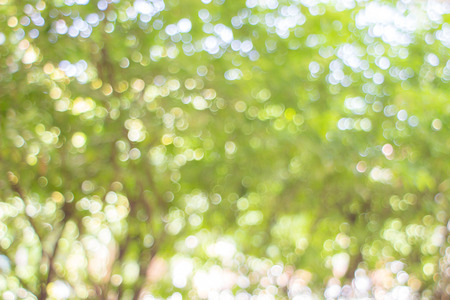 summer background: Natural green blurred background. Stock Photo