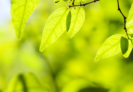 spring background: green leaves on the green backgrounds