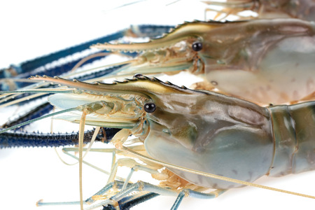 rosenbergii: Giant Freshwater Prawn (Macrobra chium rosenbergii), Fresh shrimp  on white background