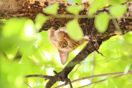 Katze auf einem Baum.