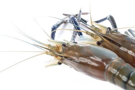 rosenbergii: Giant Freshwater Prawn (Macrobra chium rosenbergii), Fresh shrimp on white background Stock Photo