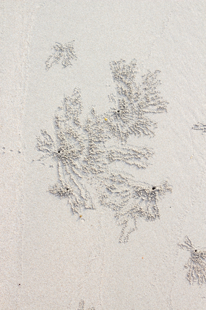 burrows: Psuedofeces on the beach by ghost crab