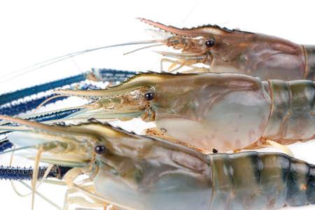 rosenbergii: Giant Freshwater Prawn (Macrobra chium rosenbergii), Fresh shrimp  on white background