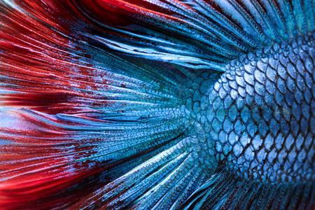 魚皮 - シャムの戦いの魚のクローズ アップ