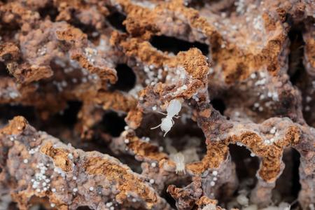 nests: termite nests Stock Photo