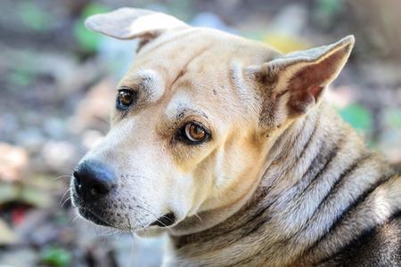 mongrel: Close-up  mongrel dog