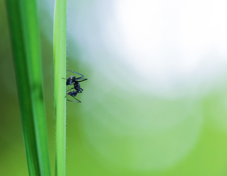 Black ant on a green grass