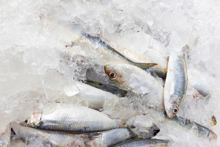 Fresh sardines in fish markets.