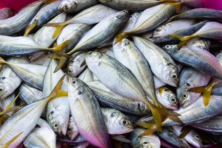 Fresh Yellow-stripe scad in fish markets. 写真素材