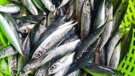 mackerel fish Standard-Bild