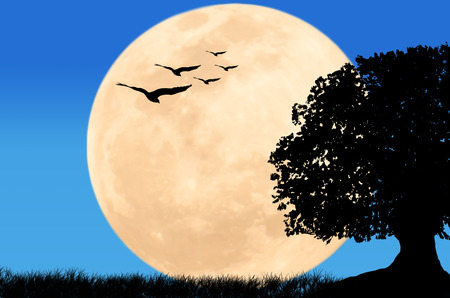yellow trees: beautiful night full moon at wild and eagle fly on blue sky Stock Photo