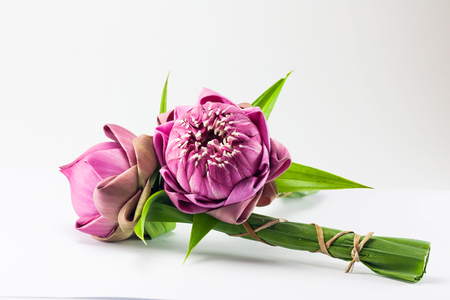 lotus flowers: pink lotus flower on white background Stock Photo