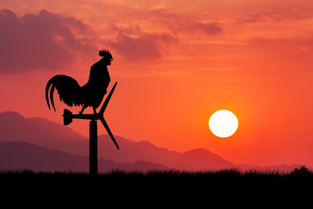 morning  cock: Roosters crow stand on a wind turbine. In the morning sunrise background Stock Photo