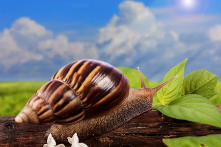 gastropod: gastropod on wooden natural  blue sky background