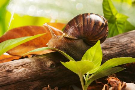 gastropod: gastropod eating leaves on wooden natural background