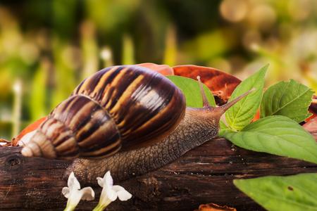 gastropod: gastropod on wooden natural  background