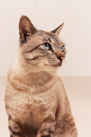 grey eyed: cute gray cat  in the room