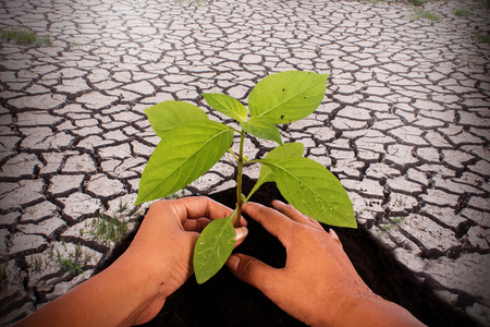 rainless: Environment concept,hand plant tree on cracked ground from rainless
