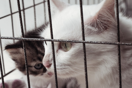 locked up in a cage: Mom cat in cage vintage tone