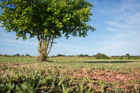vacant land: Green tree on blue sky background Stock Photo