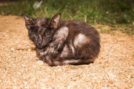 stray: Stray kitten cat Stock Photo