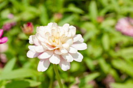 sylvan: White flower in garden