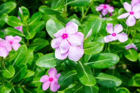 sylvan: Pink flower
