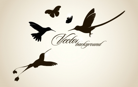 Beautiful hummingbird background Vector