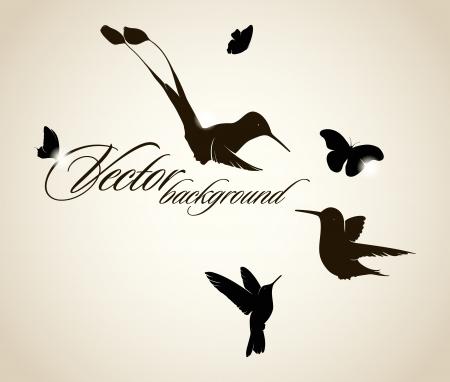 humming: Beautiful hummingbird background Illustration