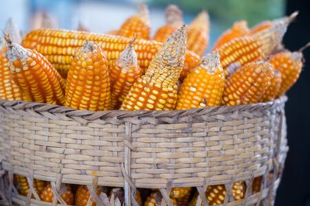 basket weaving: Yellow corn Basket weaving, wood