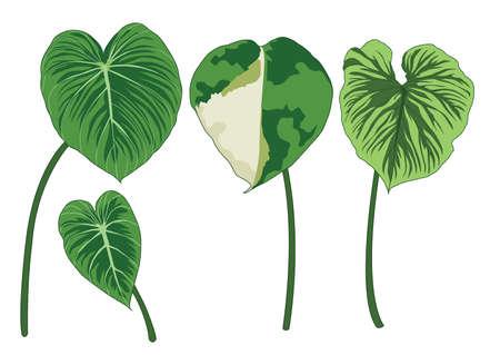 Green bon Leaves on white background illustration vector
