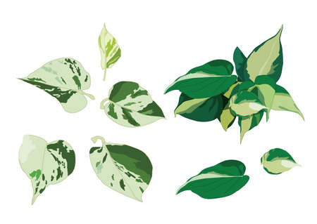 Green Leaves on white background illustration vector