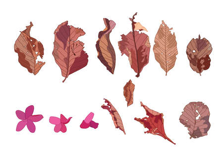 Colour brown dry leaf paint on white background illustration vector Çizim