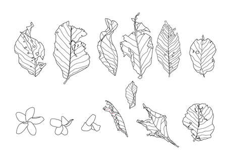 Skeletal leaves dry leaf lined design on white background illustration vector