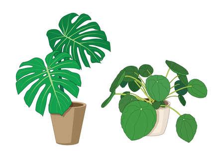 Bon trees in pots fresh on white background illustration vector