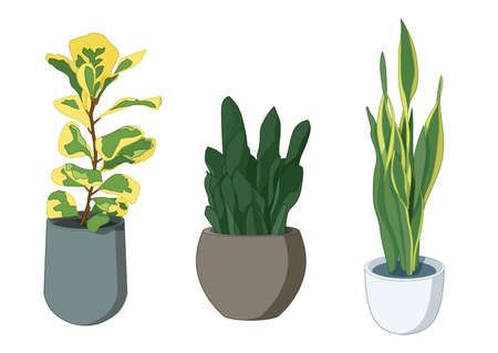 green leaves trees in pots fresh on white background illustration vector
