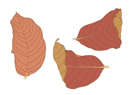 Colour brown dry leaf paint on white background illustration vector