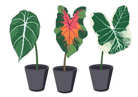 Green red bon Leaves on white background illustration vector