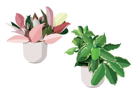 pink and green leaves trees in pots fresh on white background illustration vector