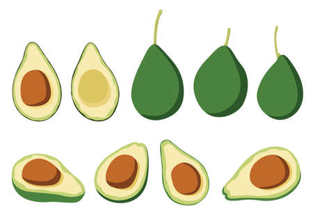 avocado fruit and half isolated on white background illustration vector