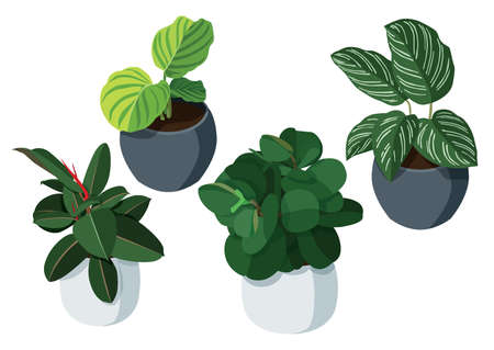 green leaves trees in pots fresh on white background illustration vector  イラスト・ベクター素材
